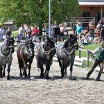 Tag des Steirischen Pferdes